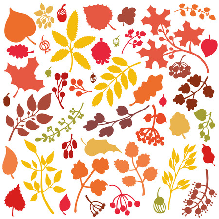 acorn: Vector autumn leaf and berries set.Isolated colored Silhouette of berries, leaves,branches,acorn.Fall harvest.Natural design template,pattern, wallpaper, web page and print.Vector Illustration