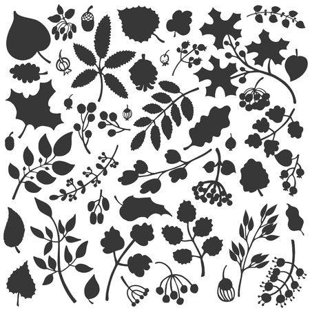 acorn: Vector autumn leaf and berries set.Isolated Silhouette of berries, leaves,branches,acorn.Fall harvest.Use for design template,pattern, wallpaper, web page and print.Vector Illustration