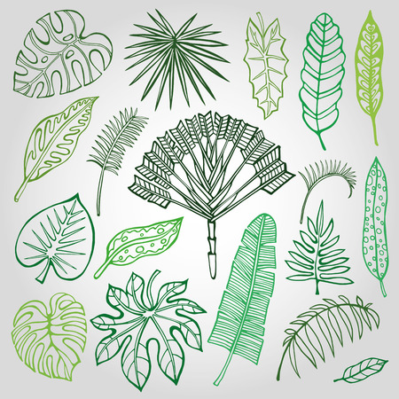 Tropical palm leaves set.Vector leaf,outline drawing in vintage style.Isolated on white.Monstera leaves.Tree branches.Exotic graphic  illustration,tropic paradise collection.Plant vector leaves,summer