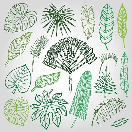 Tropische palmbladeren set.Vector blad, schetsen tekening in vintage style.Isolated op white.Monstera leaves.Tree branches.Exotic grafische illustratie, tropische paradijs collection.Plant vector bladeren, de zomer Stock Illustratie