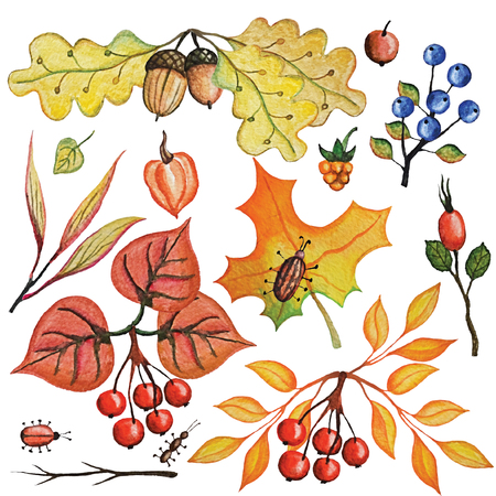 Vintage Watercolor autumn branches, leaves,berries,insects,cereals set.Hand drawing isolated objects on white background. Autumn harvest illustration. Objects allocated in the path