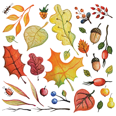 Vintage Watercolor autumn leaves,berries,insects,cereals set.Hand drawing isolated objects on white background. Autumn harvest illustration. Objects allocated in the path
