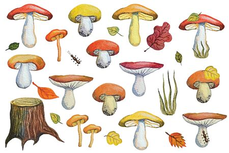 Vintage Watercolor autumn mushrooms,leaves,insects set.Hand drawing isolated objects on white background. Forest harvest,food illustration. Objects allocated in the path