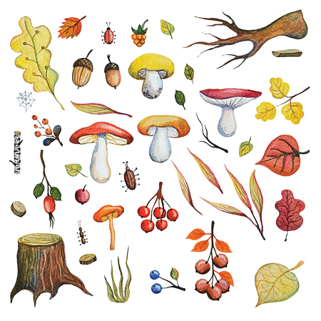 Vintage Watercolor autumn mushrooms,berries,branches leaves,insects set.Hand drawing isolated objects on white background. Fall harvest illustration. Objects allocated in the path Stock Photo