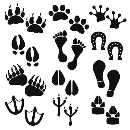 animal tracks: Las huellas de animales pájaros personas