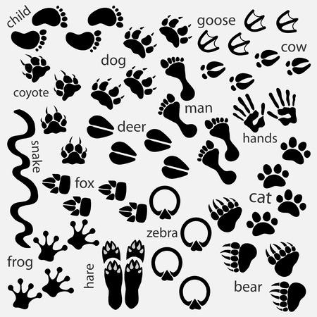 animal tracks: Las huellas de animales, aves, personas
