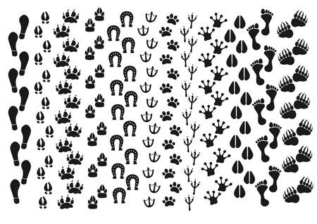 Traces d'animaux, d'oiseaux, de personnes Banque d'images - 49711943