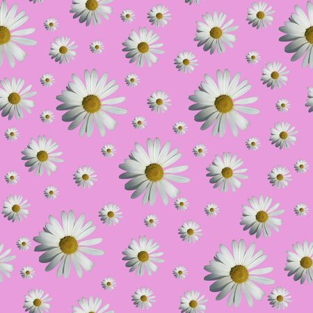 Daisy pattern. Top view. Flat lay. Floral pattern of white chamomile flowers on pink background. Stock Photo - 132120695