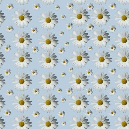 Floral camomile pattern on a blue background. Flat layer Banco de Imagens - 132121527