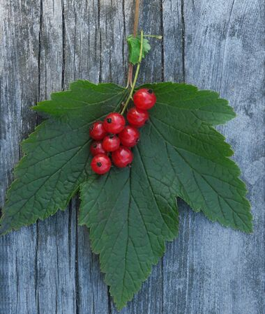 One whole red currant berry string flatlay isolated on brown wooden table