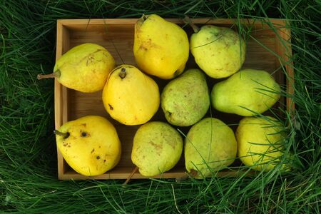 the harvest of the pears in wooden box on green grass, autumn harvest, october garden, top view