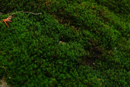 Green moss on the rock, moss on natural pathway. Green moss macro photo Banco de Imagens
