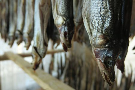 Stockfish is unsalted fish, especially cod, dried by cold air and wind on wooden racks Stok Fotoğraf
