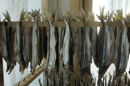 Stockfish is unsalted fish, especially cod, dried by cold air and wind on wooden racks, fish dry for eaten with beer