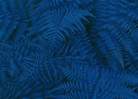 Beautyful ferns leaves foliage natural floral fern background in sunlight.