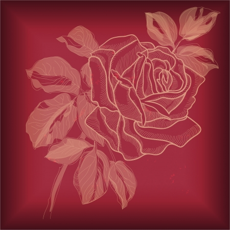 Hand drawing rose card  vector version eps 10    Vector