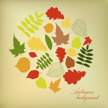 Autumn beautiful background with your text  Vector