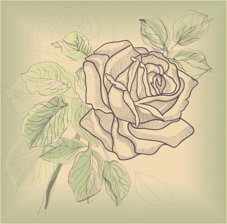 Dibujo a mano tarjeta rosa Foto de archivo - 14387903