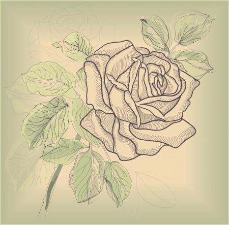 pencil plant: Hand drawing rose card   Illustration