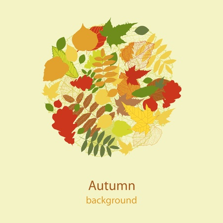 Abstract autumn beauty background Vector