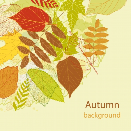 Autumnal Autumnal bright leaf background  Vector