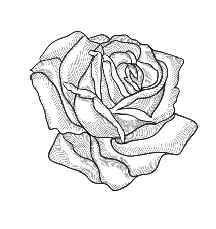 Dessin � la main vintage rose vecteur eps 8