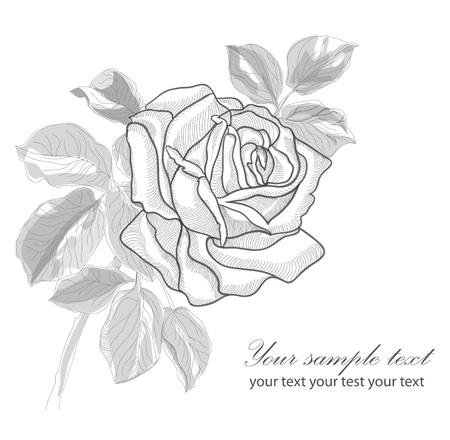 brown: Vintage hand drawing rose