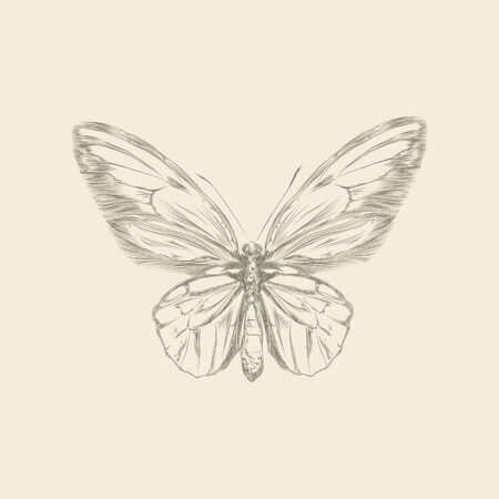 butterfly hand: Vintage hand drawing butterfly vector eps 8 Illustration