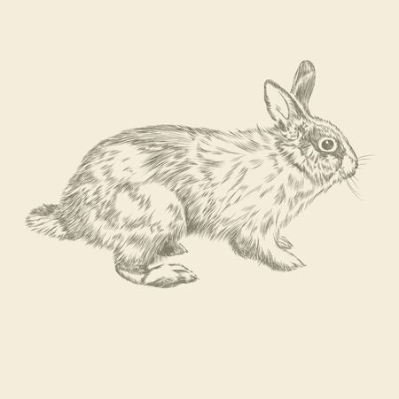 bunny rabbit: Vintage hand drawing rabbit