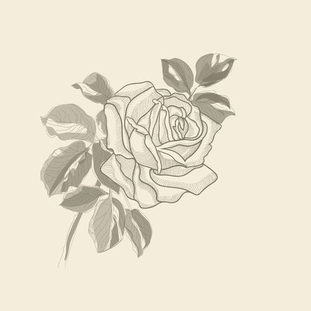 Hand drawing background old rose vector eps 10