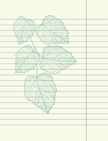 Hand drawing autumn leaf   Vector