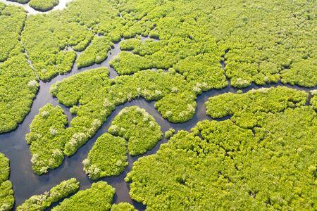 Mangroven, Ansicht von oben. Mangrovenwald und gewundene Flüsse. Tropischer Hintergrund. Die Natur der Philippinen.