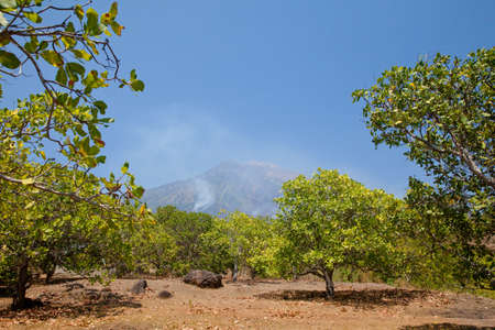 Cashew trees near the Agung volcano. Landscape on the island of Bali, Indonesia.