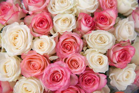 White and pink roses, close-up. Large bouquet of roses.