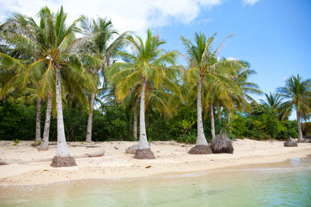 White sand beach and palm trees. Deserted beach. Caramoan Islands, Philippines. Reklamní fotografie