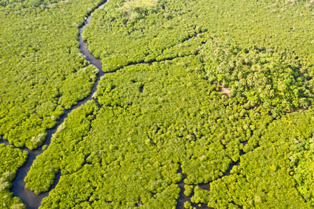 Mangroves with rivers in the Philippines. Tropical landscape with mangroves and islands. Coast of the island of Siargao.