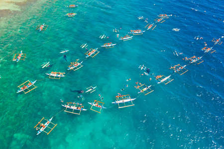Tourists are watching whale sharks in the town of Oslob, Philippines, aerial view. Summer and travel vacation concept. Reklamní fotografie