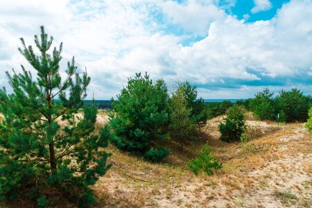 Sand dunes on the Curonian spit. Beautiful landscape on the Baltic sea. Kaliningrad region.