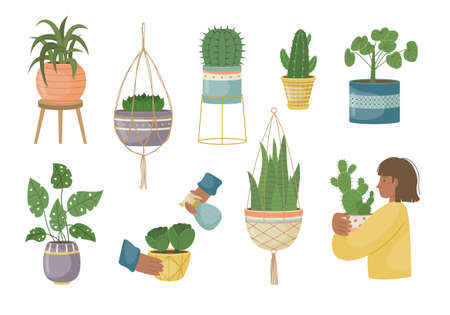 The set of house plants in the pots. Planting plants. Decorative plants in the interior of the house. Flat style. Illustration