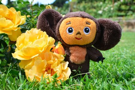 plush toy: Soft plush toy Cheburashka (famous Russian cartoon character) stands near yellow roses in a garden during a bright day