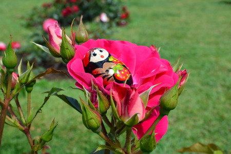 matryoshka doll: Matryoshka doll lies on a big red rose in a garden during a sunny day Stock Photo