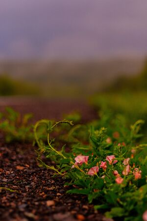 Roadside grass in rainy weather. Gray sky, forest and fog. Imagens