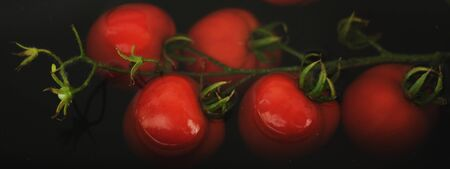 Branch of tomatoes on a dark background. Tomatoes in the dark water. Farm tomato production