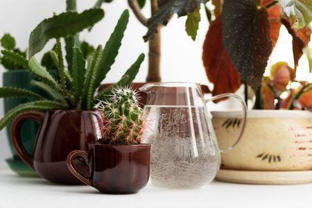 Eine Gruppe verschiedener Zimmerblumen auf der Fensterbank - Sukkulenten, Kakteen und Laubpflanzen. Innendekoration mit Grün. Gießkanne mit Wasser zur Bewässerung in Form eines Glases. Standard-Bild