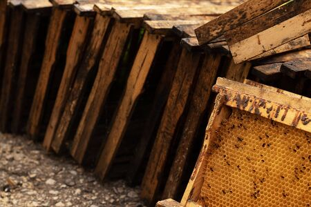 Wooden honeycomb frames without honey lie in large numbers on the ground. Propolis on the framework. Bee diseases.