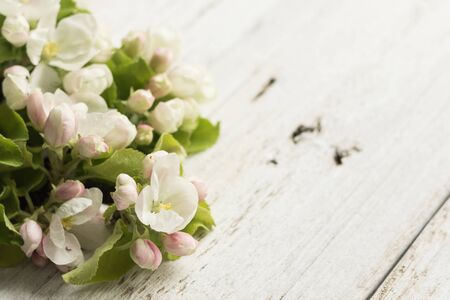 Apple blossom on a wooden white background. Copy space and horizontal orientation. Banque d'images