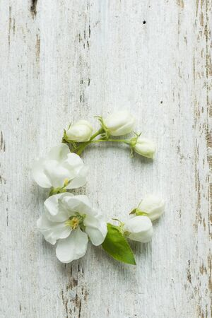 Buds and leaves of apple tree on a white wooden background, flower alphabet. Letter C