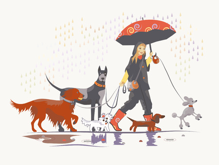 Girl, dog walker, is taking pack of dog for a walk.  Vector