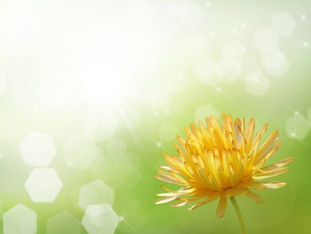 Light green bokeh blur background with yellow flower.                           photo