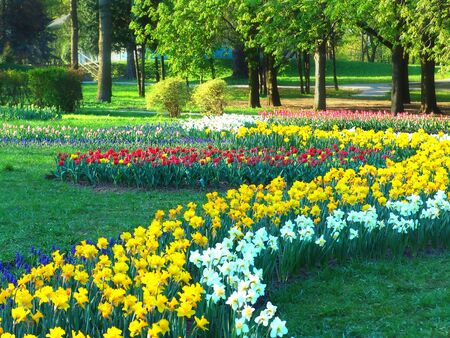 Spring sunny park with decorative flowerbed.                                photo